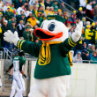Постер, плакат: Oregon Ducks Mascot Puddles at Autzen Stadium