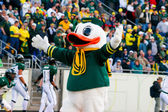 Oregon Ducks Mascot Puddles at Autzen Stadium — Stock Photo