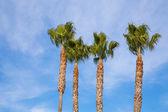 Palmiye ağaçları ve mavi gökyüzü — Stok fotoğraf