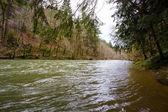 Siuslaw River Regular Flows — Stock Photo
