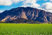 Strawberry Field and Mountains — Stockfoto