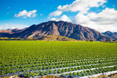 Strawberry Field and Mountains — Stock Photo