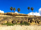 Four Palm Trees California Beach — Stock fotografie