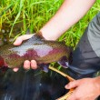Fly Fisherman Holding Trophy Rainbow Trout — Stock Photo #47045295