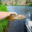 Fly Fisherman Holding Trophy Rainbow Trout — Stock Photo #47045333