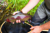 Fly Fisherman Holding Trophy Rainbow Trout — Stock Photo