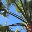 Stock Video: Palm tree