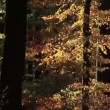 Stock Video: Forest in Fall