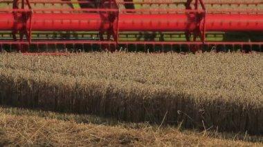 Combine Harvester — Stock Video