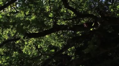 Sun shining through branches — Stock Video