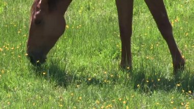 Bir at kafası — Stok video
