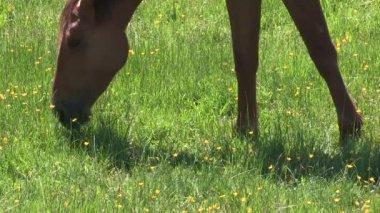 一匹马的头 — 图库视频影像