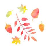 Beautiful autumn leaves — Stock Vector