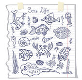 Fish, corals, crabs and shells — Stock Photo