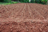 Start cultivation Cassava or manioc plant field at Thailand — Stock Photo