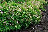 Jardín de flores de fondo — Foto de Stock