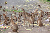 Monkeys eating food that people bring to the street. — Stock Photo
