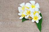 White plumeria flower on sack Pattern — Stock Photo