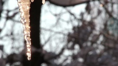 Icicle drips,icicle melts — Stock video