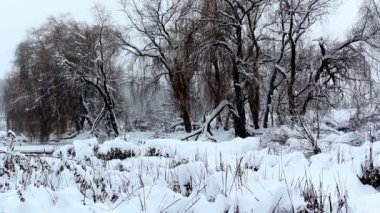 Winter landscape,snowfall in the park,snow in the woods — Stockvideo