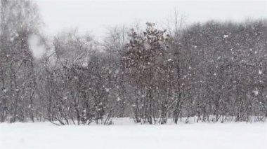 冬季景观,在公园里,在树林里的雪场降雪 — 图库视频影像