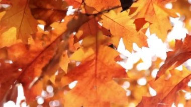 Sun shining through the autumn leaves — Vídeo de stock