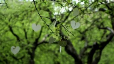 White cardboard heart on the tree — Vídeo de stock