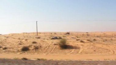 Camels in the desert,dromedary in the desert — Vídeo de Stock