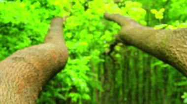 Mossy stone in the forest (move).Moss covered rocks.Camera movement. — Stock Video