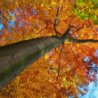 Stock Photo: Autumn