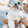 Funny dog with glasses — Stock Photo