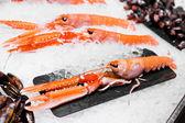 Large prawn — Stock Photo