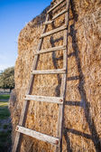 Ladders leaning on bales of hay — Stock Photo