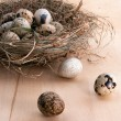 Nest with quail eggs — 图库照片