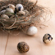 Nest with quail eggs — Stockfoto