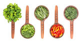 Flavoring herbs and spices in ceramic scoops — Stock Photo