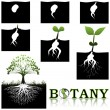 Botany — Stock Vector