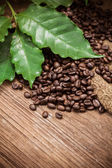 Fresh coffee beans on wood background — Stock Photo