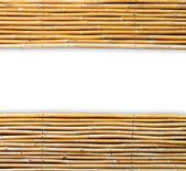 Bambu på vit bakgrund — Stockfoto