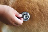 Examining dog — Stock Photo