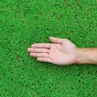 Open hands. Holding, giving, showing concept on green grass back — Stock Photo