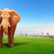 Elephant walking in grass field with cityscape background — Stock Photo