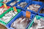 Vielzahl von frischem fisch meeresfrüchte im markt — Stockfoto