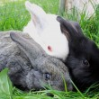 Three rabbits, black, gray and white. — Stock Photo