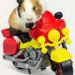 Stock Photo: Rodent on motorcycle.