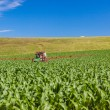 Farming Tractor Maize Crops — Stock Photo