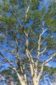 Ağaçlar yeşil orman ateşi — Stok fotoğraf