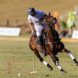 Stock Photo: Horse Polo Game Action
