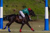 Pferd Polo Spielaktion — Stockfoto
