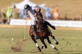 Horse Polo Game Action — Stock Photo